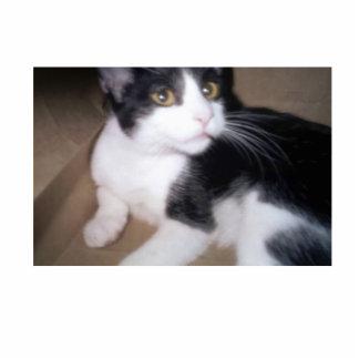 Cat Photo Cutouts