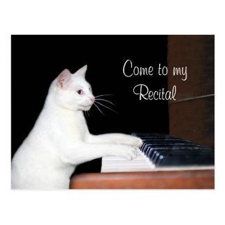 Cat piano recital postcard