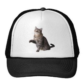 cat picture mesh hat