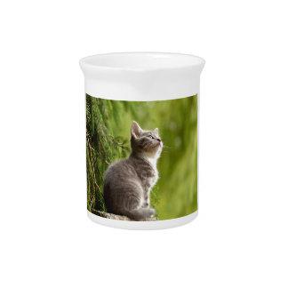 cat pitcher