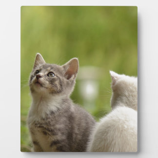 cat plaques