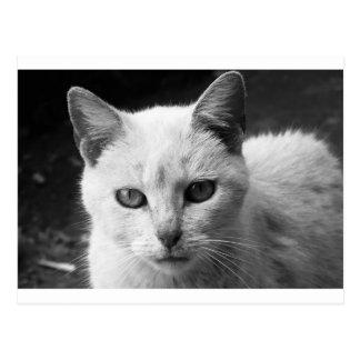 cat postcard