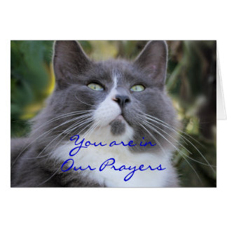 Cat Prayer card-change for any occasion Card