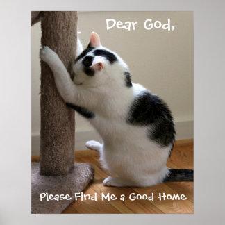 Cat Praying Poster