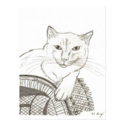 Cat Ragdoll Portrait Post Card
