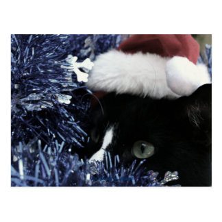 Cat ready to pounce behind blue tinsel, faded tint postcard