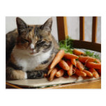 Cat 'Red' with Carrots Post Card