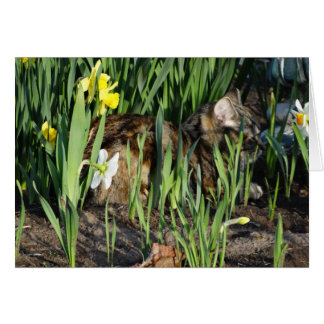 Cat Resting Among Daffodils, Relaxation Card