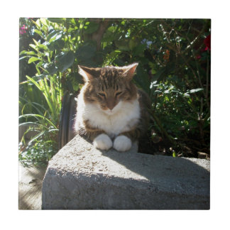 Cat resting on a wall small square tile