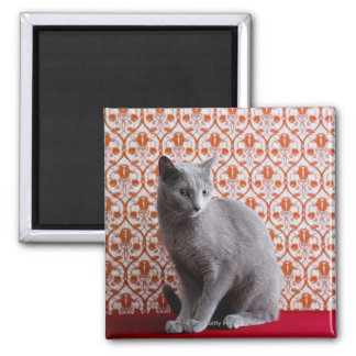 Cat (Russian blue) and wallpaper background Square Magnet
