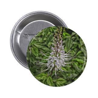 Cat s Whisker Flower Pinback Button
