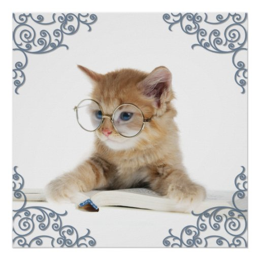 Cat Scholar Posters
