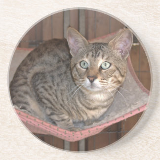 Cat Series---Serval Savannah Cat---Coaster Coaster