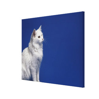 Cat sitting against blue background stretched canvas prints