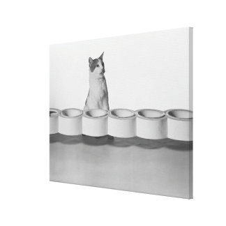 Cat sitting and licking beside pet bowl on white gallery wrap canvas