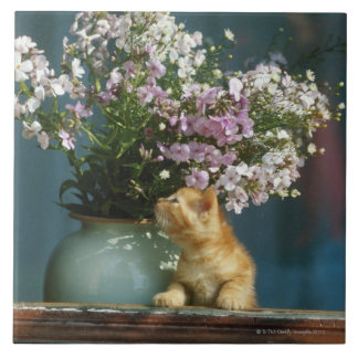 Cat sitting besides flower vase on window sill ceramic tile