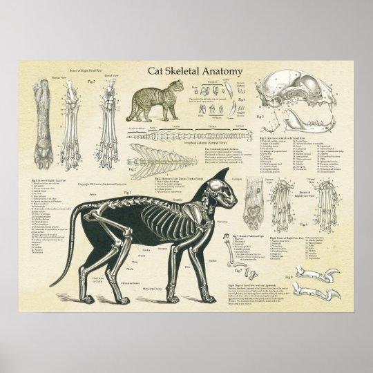 Cat Skeletal System Bones Anatomy Chart