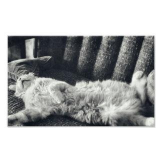 Cat Sleeping On Couch Feline Sofa Kitty Photo Print