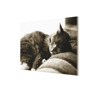 Cat sleeping on sofa (B&W sepia tone) Canvas Print