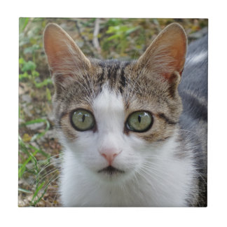 """Cat Small (4.25"""" x 4.25"""") Ceramic Photo Tile"""