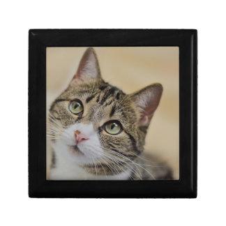 cat small square gift box