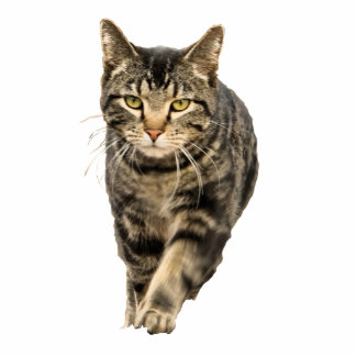 Cat stalking you photo sculpture key ring