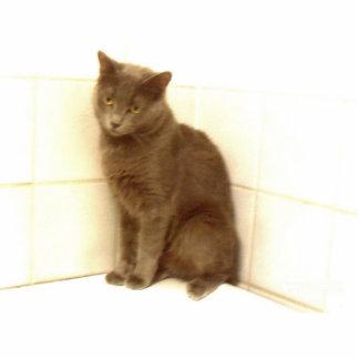 Cat Standing Photo Sculpture