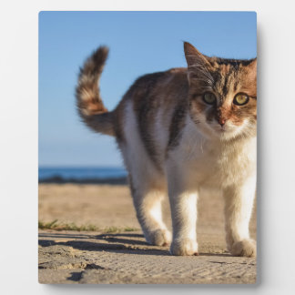 Cat Stray Animal Cute Young Face Eyes Beach Plaque