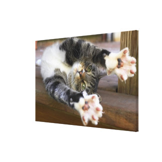 Cat stretching, indoors canvas prints
