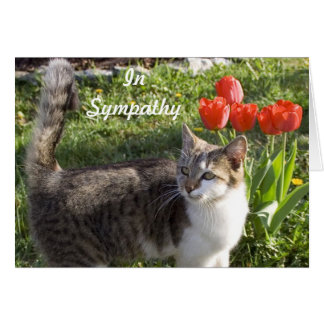 Cat Sympathy with Red Tulips Card