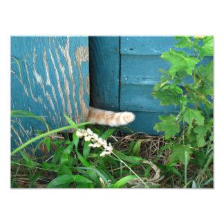Cat Tail ~ Photo