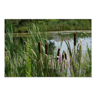 Cat Tail Sway 15 29 x 10 18 Photographic Print