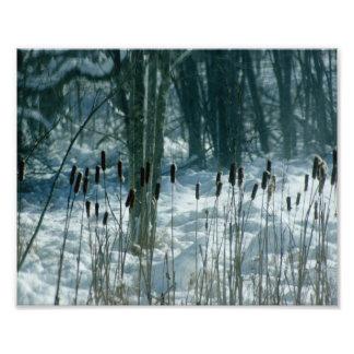 Cat tails & Snow Trails Photograph