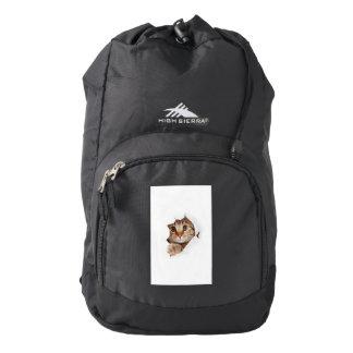 Cat tearing paper - looking cat - cute cats - pet backpack
