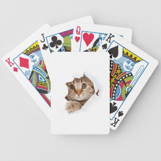 Cat tearing paper - looking cat - cute cats - pet bicycle playing cards