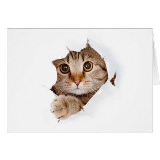 Cat tearing paper - looking cat - cute cats - pet card