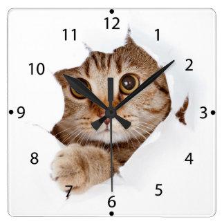 Cat tearing paper - looking cat - cute cats - pet square wall clock