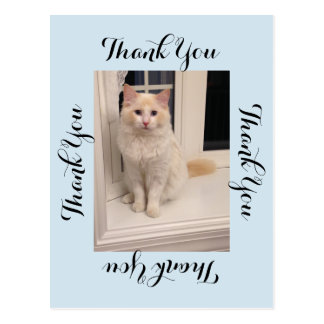 Cat Thank You Postcard - Blue