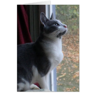 Cat Thinking of You Over the Miles Inspirational Card