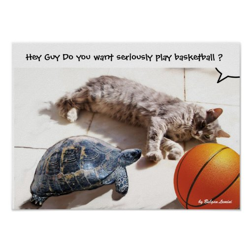 CAT ,TURTLE  AND BASKETBALL POSTER