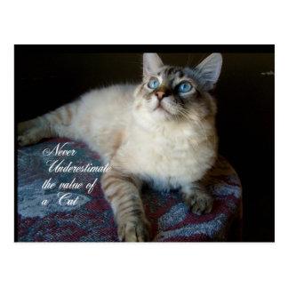 Cat value postcard
