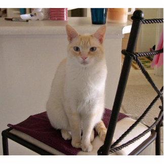 Cat w/ blue eyes standing photo sculpture