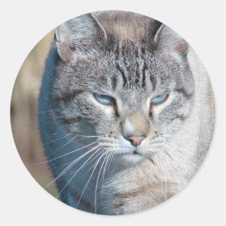 Cat Walk Round Sticker