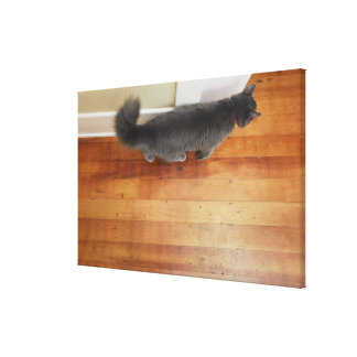Cat walking stretched canvas print