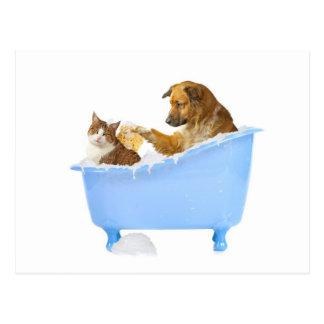 Cat Wash Postcard