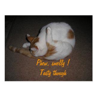 Cat Washing Postcard