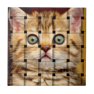 Cat Weave Small Square Tile