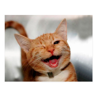 Cat winking - orange cat - funny cats - cat smile postcard