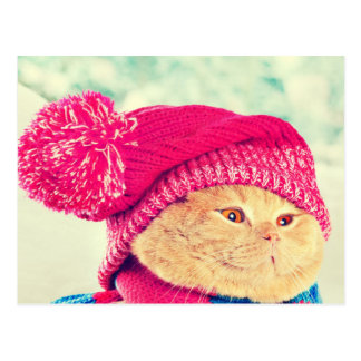 Cat With A Warm Knitted Hat Postcard
