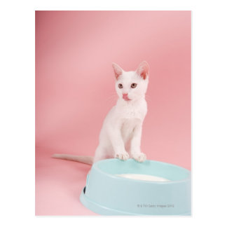 Cat with bowl of milk postcard